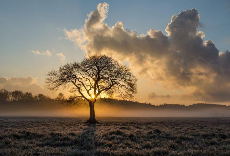 oak-tree-e1489418254619